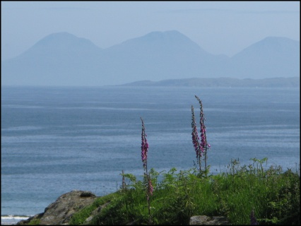Foxgloves and the Paps of Jura